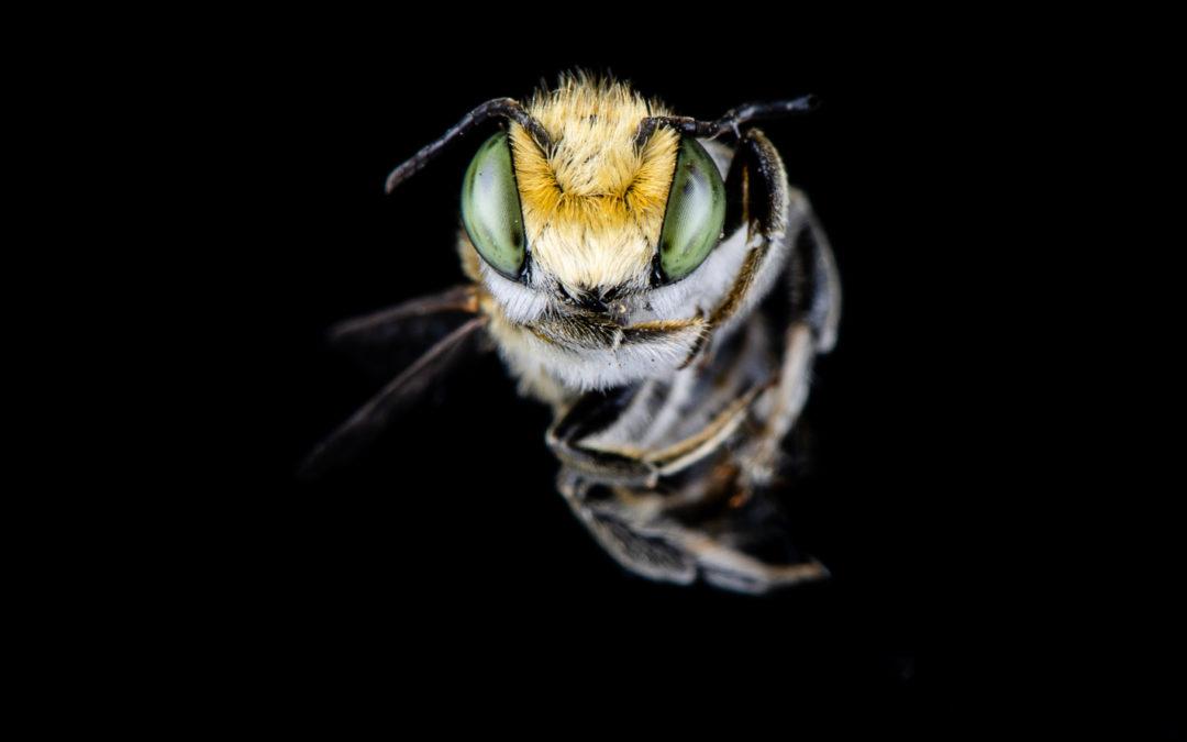 Combien d'espèces vivantes se trouvent sur Terre et que reste t'il?